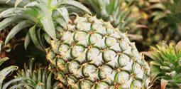 震惊!香蕉1.88元/斤,凤梨1.98元/个!这家水果店开业裸价秒杀七天!